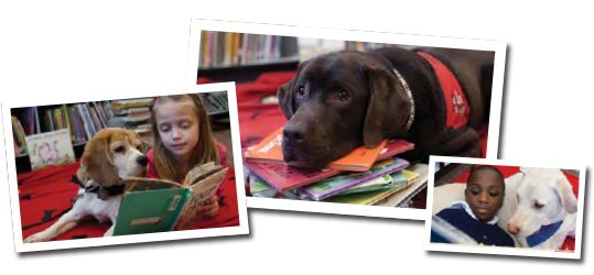 'Reading with Rover' There are many ways to help make reading more exciting and accessible to all kids, especially kids who may feel challenged by reading. This is a wonderful program that comes into libraries so that the children can interact with and read to the dogs.
