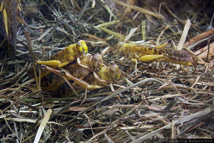 Insects - Έντομα (Schönbrunn Zoo Vienna)