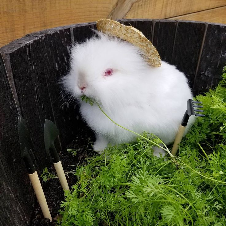 Farmer bunny. #bunny #pets #rabbit #farmer #costume #cutepet