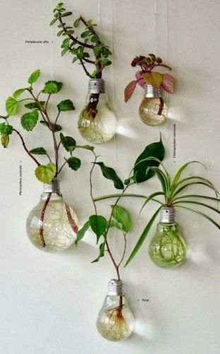 Now here's a bright idea: Using old light bulbs as hanging planters either indoors or out.