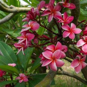 Hawaii vacation deals & news: April 15, 2014