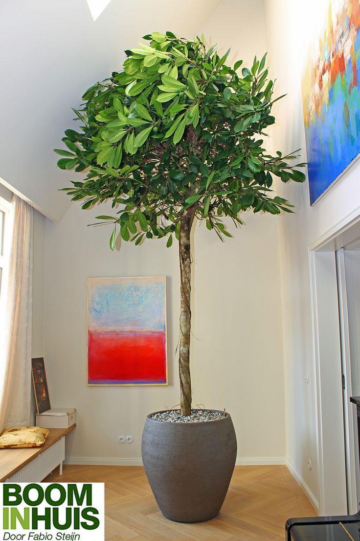 25 beste idee n over binnen plantenbakken op pinterest kamerplanten binnen bomen en venster - Ad decoratie binnen ...