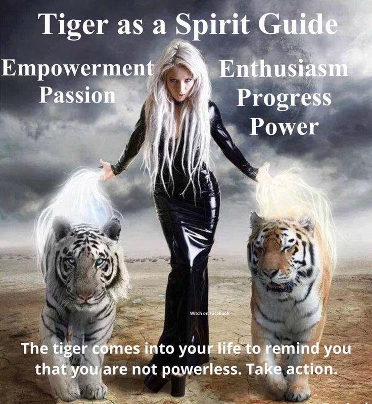 °Tiger as a Spirit Guide. I miss my friend, tiger Gamu, when I see tiger stuff.....