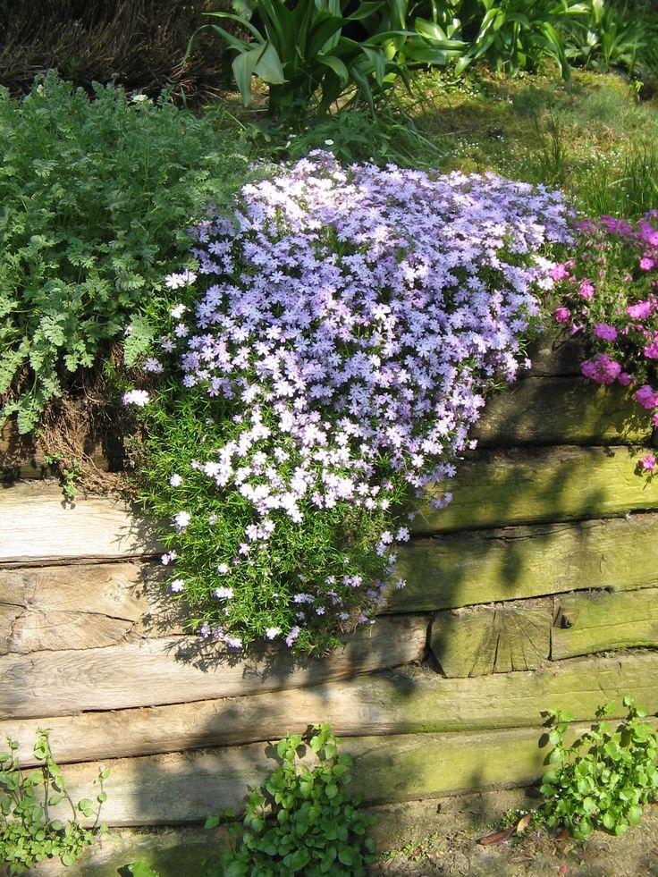 Les 25 meilleures id es de la cat gorie vivaces couvre sol sur pinterest couvre plantes - Phlox vivace couvre sol ...