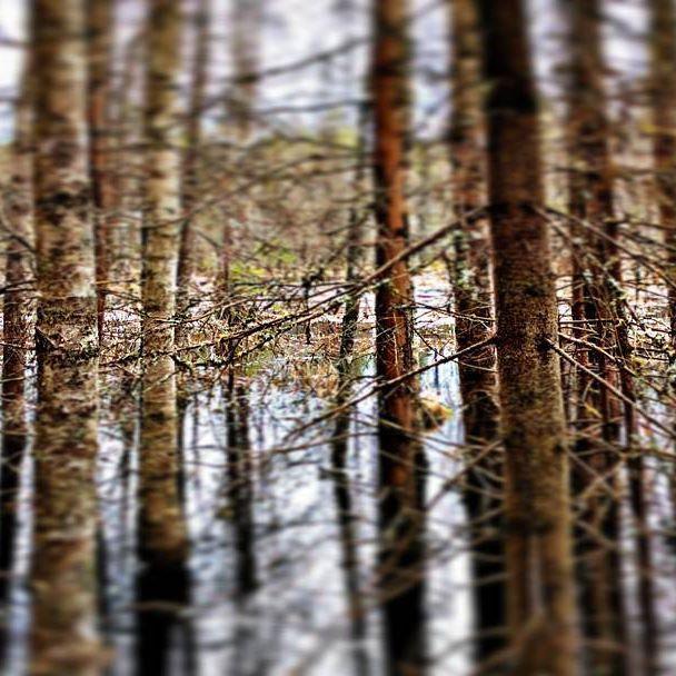 Finnish nature during spring time. Part 10 #finland #nature  #spring #beautiful #suomenkevät #luonto #luontokuva #kaunista #aamu #peilityyni #winled #winledlighting #landofthousandlakes #lake #järvi #woodland #metsä #suomi #suomenluonto #kevät #forest #tulva