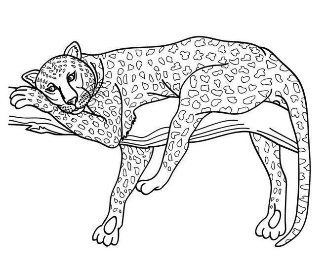 Jaguar Jungle Cat Coloring Pages Cat Coloring Page Animal Coloring Pages Dog Coloring Page