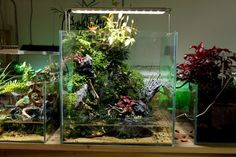 A charming Chinese aquarium and terrarium shop, Ningbo - Chihiro Water, with nice aquaria and absolutely stunning paludaria. Totoro-themed terraria are the cherry on the top :) via the Walking farm blog (I just realised that this blog has over 10K awesome followers — thank you all guys!)