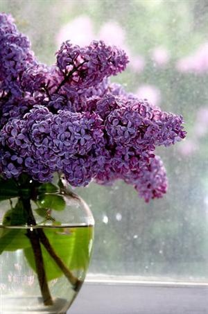 I planted a lilac bush in honor of my mother...the fragrance fills me with her spirit.