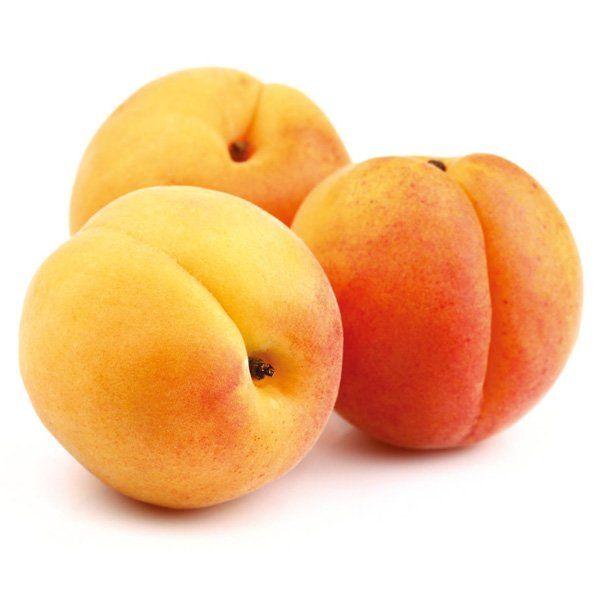 Morela - Prunus armeniaca 'Wczesna z Morden'