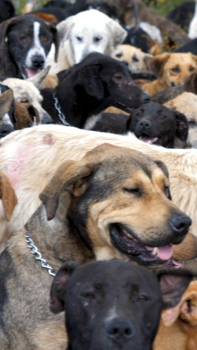 We're just here for the puppies. Home to 1,000 strays, Costa Rica's Territorio de Zaguates is the world's largest dog sanctuary!