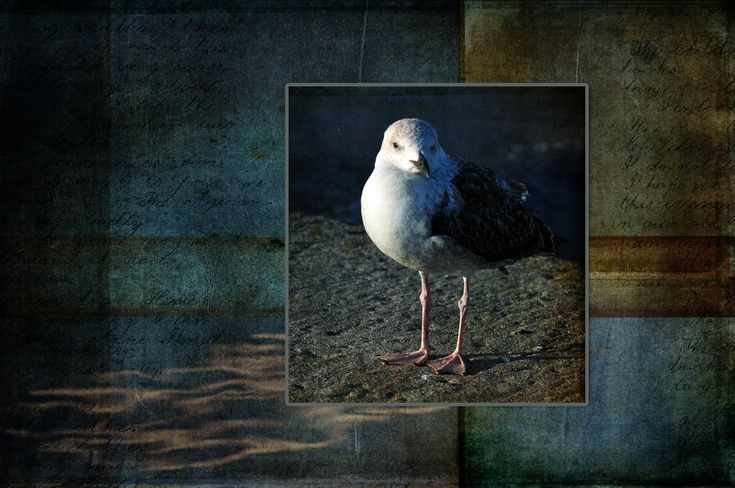 ARTFINDER: I See You by Randi Grace Nilsberg - Photo of a seagull.  Textures are added to the image.