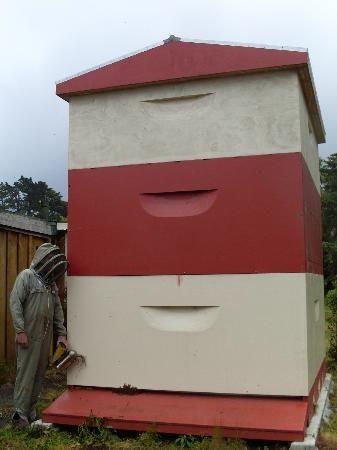 New Zealand's biggest beehive