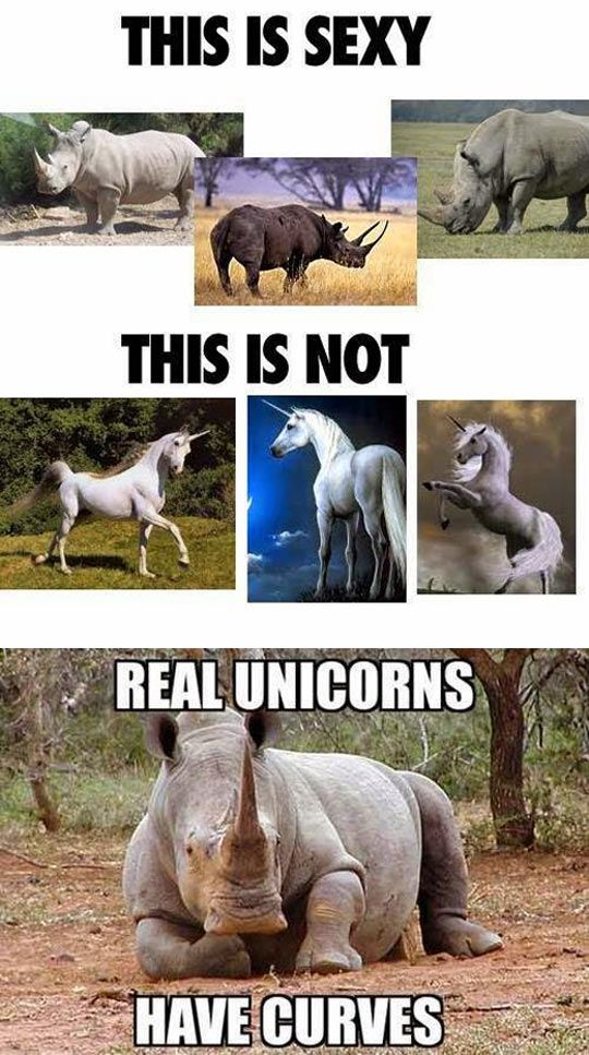 HahahaFunny Things, Laugh, Funny Pictures, Real Unicorns, Too Funny, Funny Quotes, Funny Stuff, Humor, Curves
