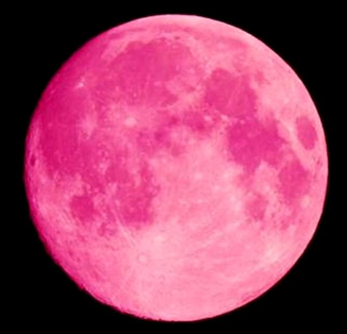 Pink Moon, I might never come in the house---- AMS