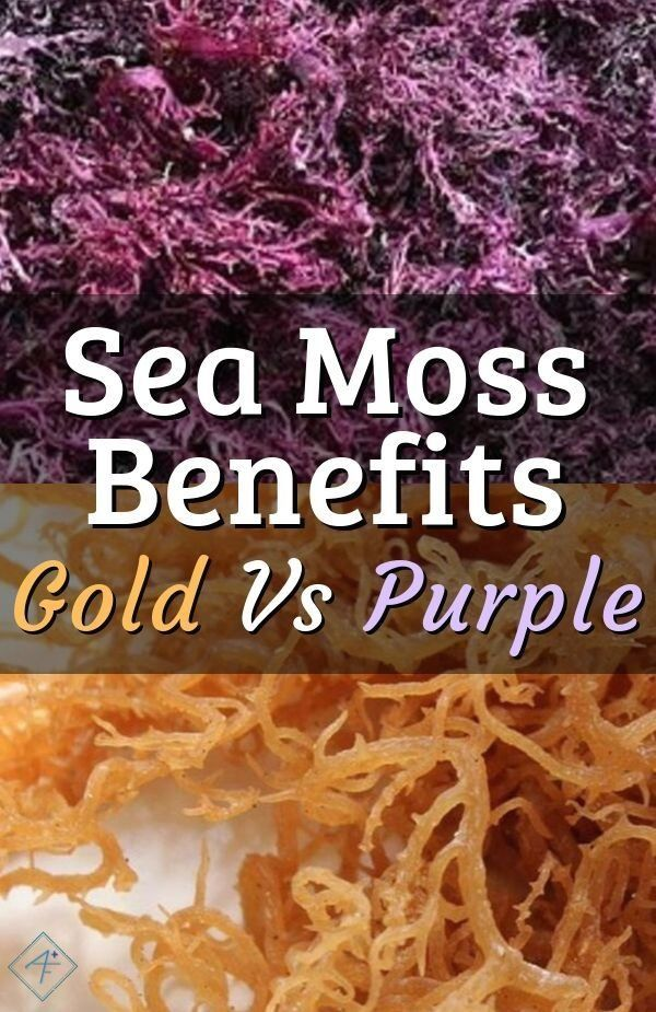 Sea Moss Dr Sebi Approved Food How To Use Sea Moss Gold Vs Purple Benefits And Products Modern Design Sea Moss Seamoss Benefits Dr Sebi Alkaline Food