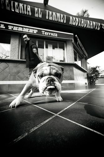 Fotografía de mascotas - Blogs - Canonistas.com