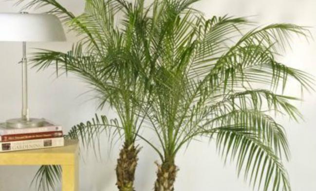 Las 25 mejores ideas sobre plantas que purifican el aire for Flores para el hogar feng shui