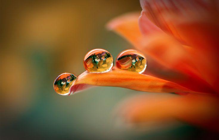 three flower droplets