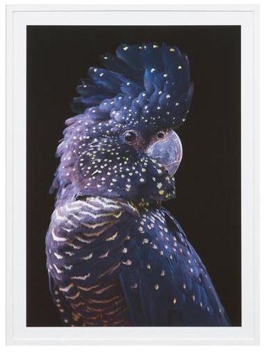 Black Cockatoo Print, Animal Digital Print