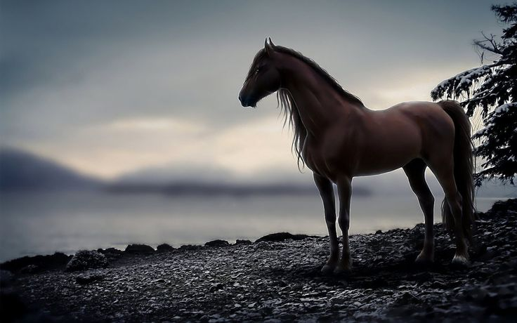 black horse hd wallpapers cool desktop background images(19201080)