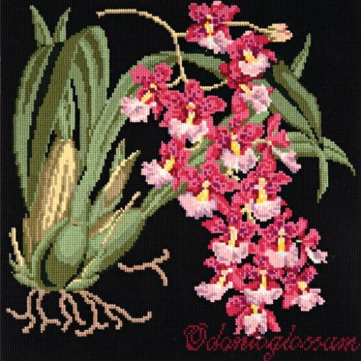 Odontoglossum needlepoint kit from the Exotics Collection at Elizabeth Bradley