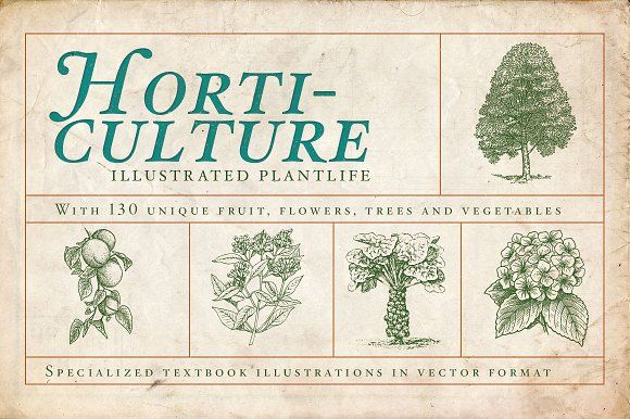 Horticulture - 130 plant vectors Graphics Horticulture offers you a beautifull and unique set of vintage vectors featuring the plant kingdom by BlackBird Foundry