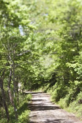 A number of hiking trails lead through the Arkansas Ozarks near Eureka Springs.