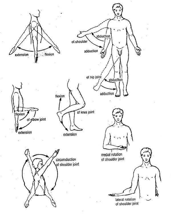 movements of limbs kinesiology pinterest physical. Black Bedroom Furniture Sets. Home Design Ideas