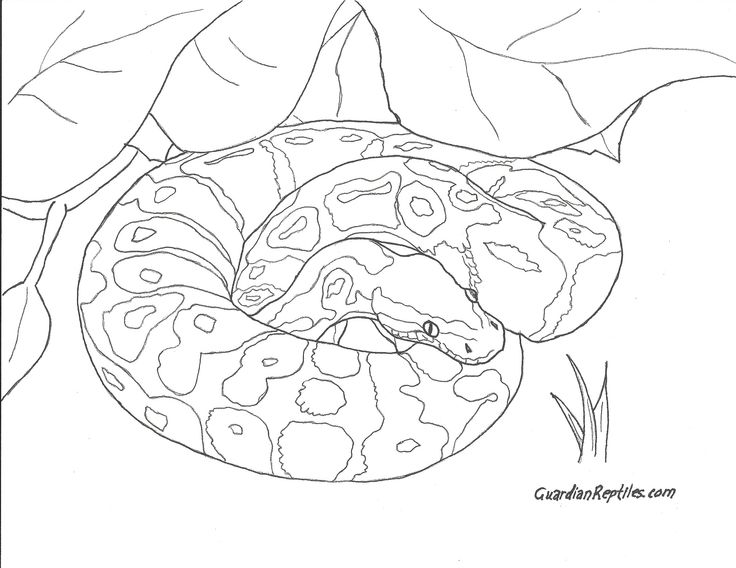 python coloring pages - photo#24