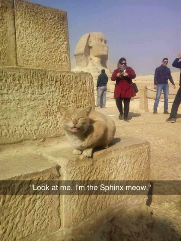 60 Funny Animal Pictures #15