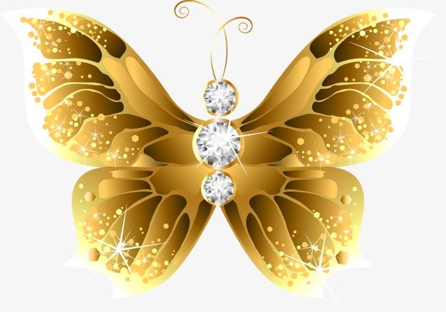 Gold Exquisite Butterfly Exquisite Gold Butterfly