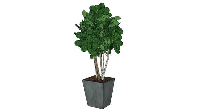 Large preview of 3D Model of plante satabilisée Salal 220 cm de haut
