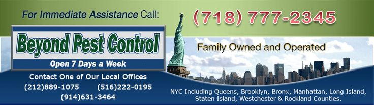 Beyond Pest Control Inc. - A leading Name in Pest Control Industry, Offers Low Cost, High Quality & Friendly Pest Control Services In NYC Area, NyPestPro.com solves pest control issues for home owners, commercial and Industrial.  http://www.nypestpro.com/