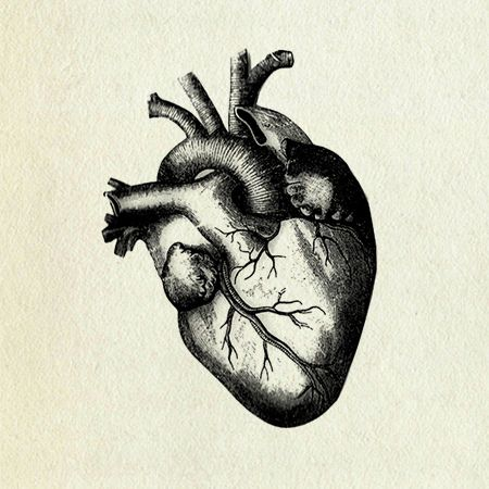 25+ best ideas about human heart drawing on pinterest | human, Muscles