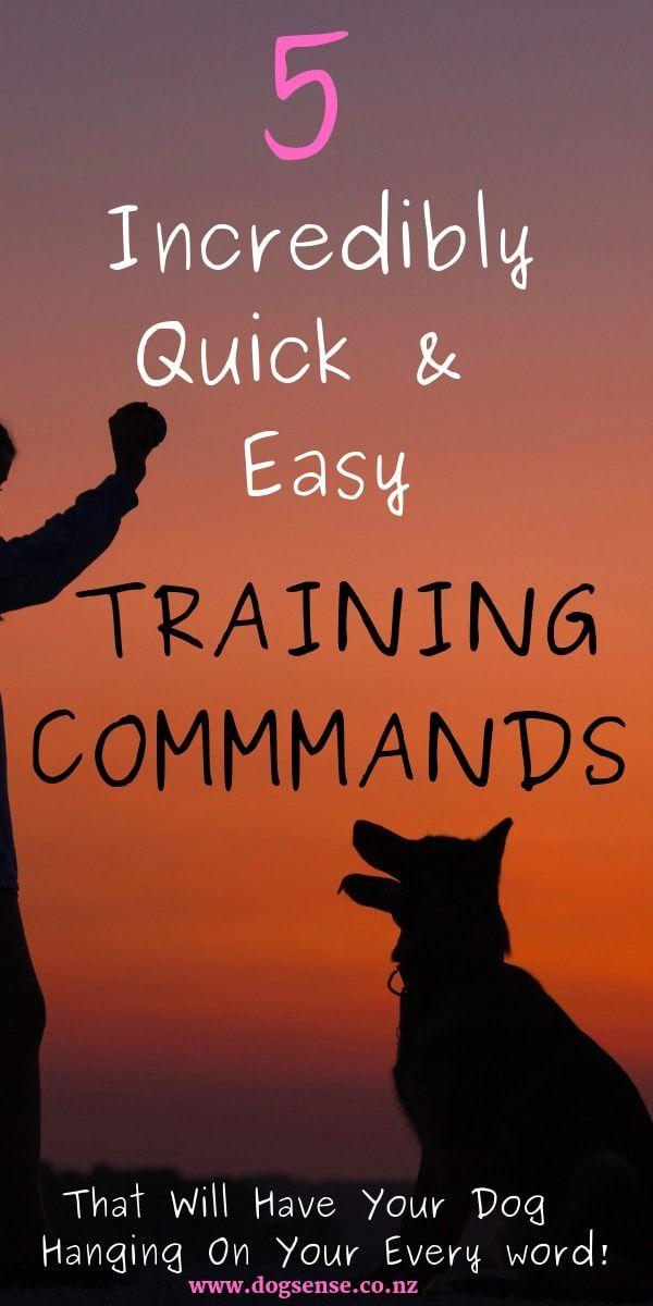 Hunting Dog Training Huntingdogtraining Training Your Dog Dog