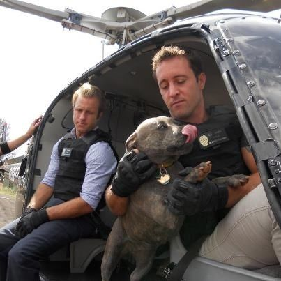 max That     s  alexoloughlin one  scottcan happy air    sale puppy