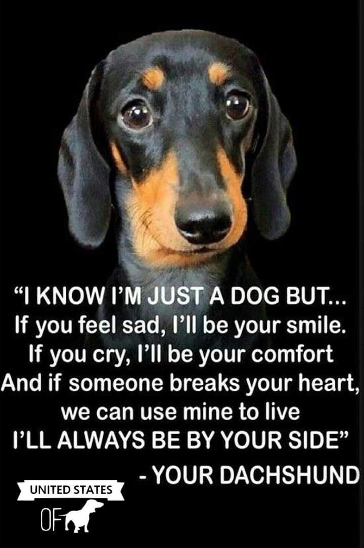 Pin By Mary Townsend On Dogs Cats Other Pets Dachshund Funny
