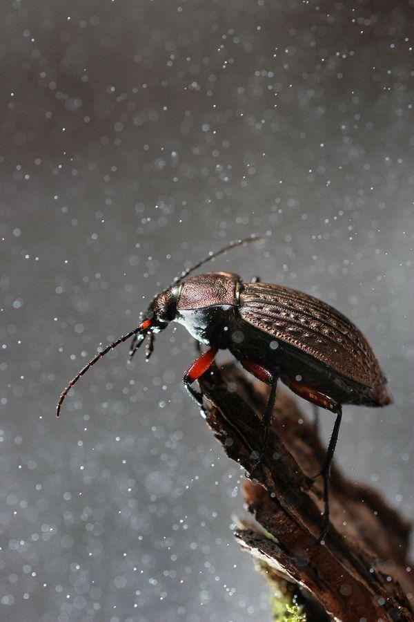 : Photoshop Training, Snow Bugs, Vadimtrunov Nicknames, Colors Photography, Vadim Trunova, Bugs Life, Insects Beautiful, Foto Vadimtrunov, Bugs Insects