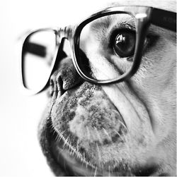 Hipster glasses. I want these for my pug.