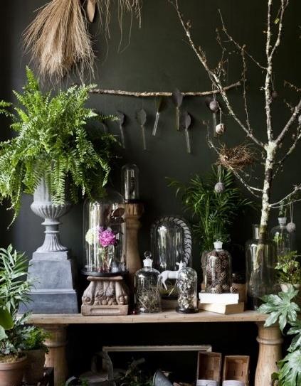 shop of curiosities beautiful halloween gothic type display cloches etc victorian