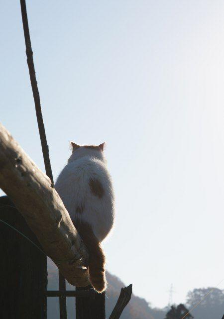 かご猫 Blog ふくろう? #kagoneko                                                                                                                                                                                 もっと見る