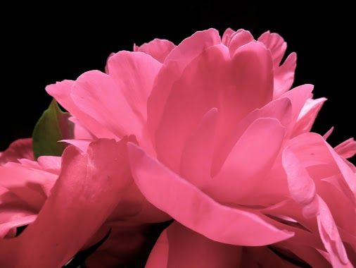 """""""Truth is beautiful within and without, forevermore""""~Ralph Waldo Emerson #quote #Flower #photo"""
