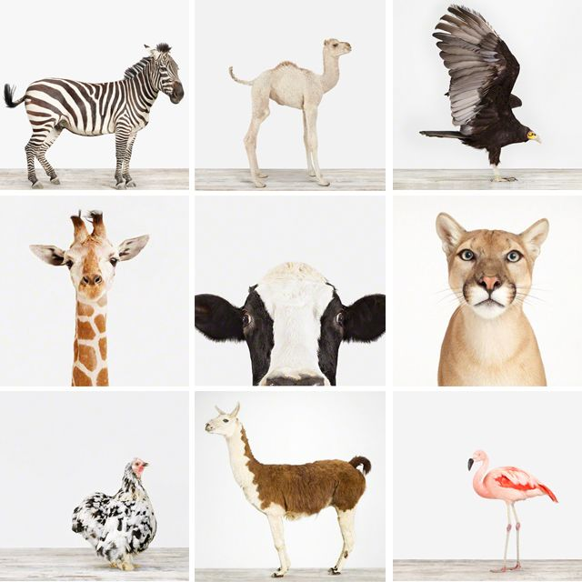 sharon montrose, Animal Print Shop