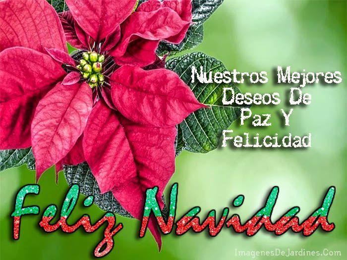 Mensajes+Cortos+De+Navidad+En+Imagenes+Con+Flores+De+Pascua