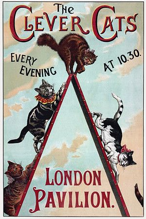 ~Vintage Circus Poster - The Clever Cats, 1888