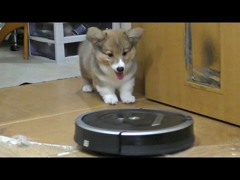 Roku saw Roomba for the first time