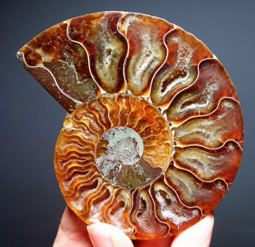 110g-1pc-of-Split-Ammonite-Fossil-Specimen-Shell-Healing-Madagascar-45