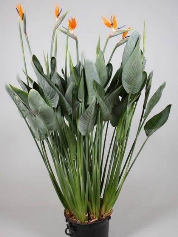 Plantas De Interior Tropicales. Beautiful Cool Imgenes Adjuntadas ...