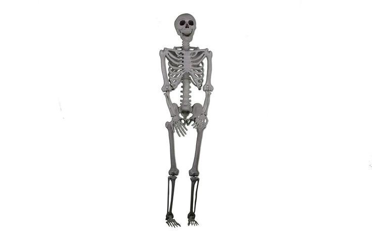 LIFE-SIZED Realistic Posable Skeleton Prop 5ft, HALLOWEEN DECORATION #ForumNovelties