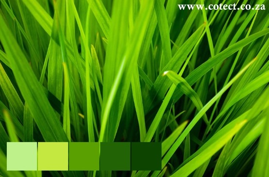 Who would have thought that grass can be such an inspiration for colour and so vivid! #Colour Palette